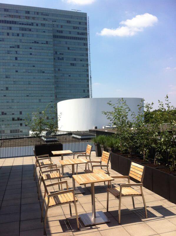 Solitärgehölze | Gräser | Dachterrasse Düsseldorf