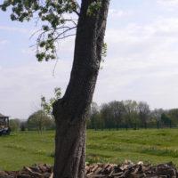 Holzscheitkreis