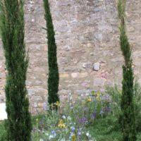 Säulenzypressen | Blumenwiese