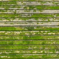 Sichtschutz | Holz | Moos
