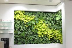 vertikale-bepflanzung-birgit-frochte-gelb-bortdel